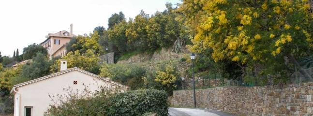 Ancient lane and mimosa in Bormes