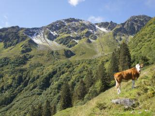 TOP 102 Wildschoenau Tyrol Austrian Alps Astoria, Oberau