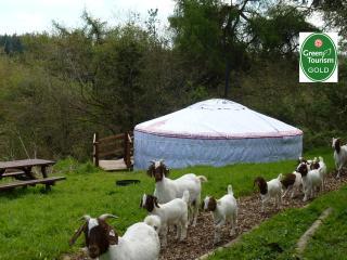 Snuggledown - The yurt