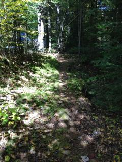 A sun-dappled path