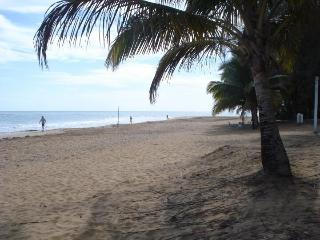 Playas del Yunque, Palmer
