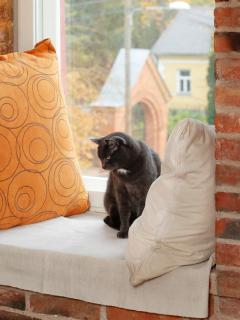 cat Juss on 2-nd floor. photo: Juta Kübarsepp