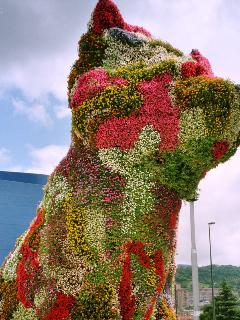 The Puppy, the Guggenheim Bilbao