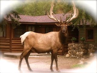 Redemption Cabin: Intimate-Upscale-Natural Retreat, Estes Park