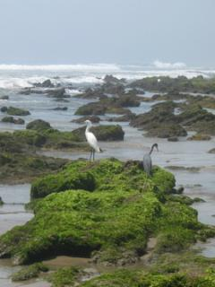Playa Troncones has a beautiful variety animal life