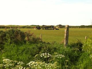 Cattle grazing in a nearby field