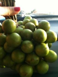 Quenepas from the patio
