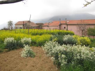 TRAMONTIDAMARE Rural Holiday Home on Amalfi Coast!