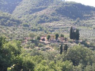Chianti, olive groves, vines, views, relax., Radda in Chianti