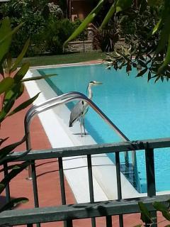 Villetta a schiera con piscina, Castiglione Della Pescaia