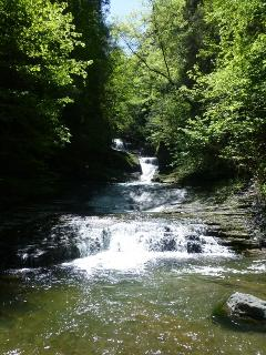 Waterfalls within hiking distance, Treman and Buttermilk State Parks only 5 minutes drive away!