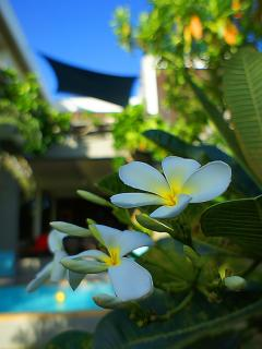Beautiful tropical garden | The Levels | luxury, sea-view, villa for rent, Koh Lanta, Thailand