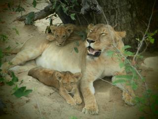 Parota Tours & Safaris Tanzania Tour Oparator, Daressalam
