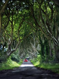 Dark Hedges, Game of Thrones