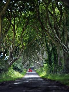 Dark Hedges, Game of Thrones