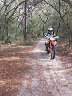 Riding on Ocala Forest trails