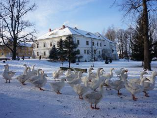 some guests buy a goose. We also supply free-range, organic eggs from the chickens