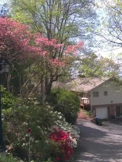 Flowers down driveway in spring