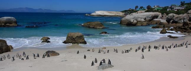 Penguins on the beach