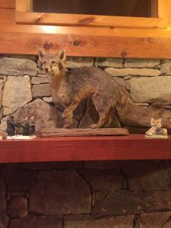 Fox Mount on fireplace mantle
