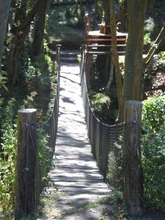 Hanging bridges leading to nature trails.