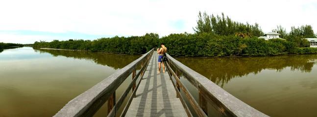 wildlife awaits in the bayou