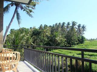 Rice paddy view all around