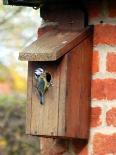 Bird box by front door