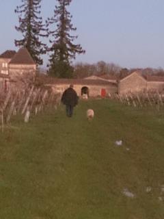 Chemin des vignes en hiver