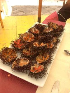 afrodisiaci  ricci di mare