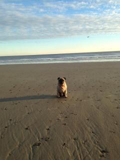 small dog, large beach
