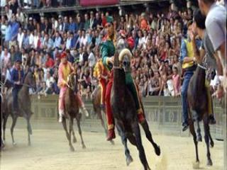 Palio, the famous race horses