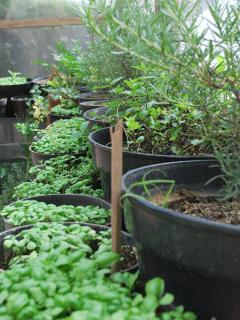 Organic herb, vegetable and tropical fruit garden
