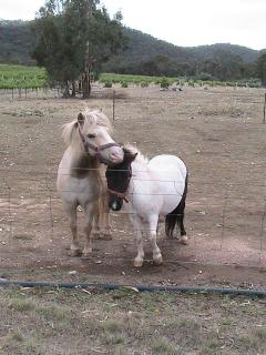 Our mini horses Casper & Coda