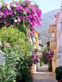 Bougainvillea is everywhere on the pretty cobbled streets of kalkan