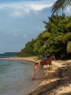 Bastimento Beach is just 3 minutes down the hill. Children swimming with their horses.