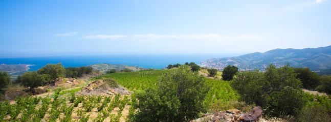 La méditerranée, vigne, soleil, bord de mer.