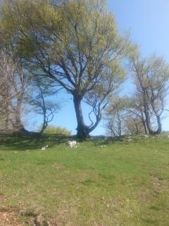 Gli alberi in montagna dove sedersi per rilassarsi