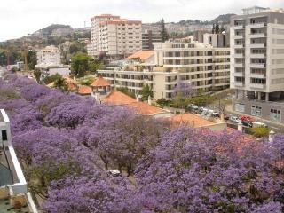 Accommodation Apartment Funchal center