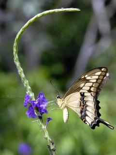 You will see butterflies and humming birds throughout the property and community