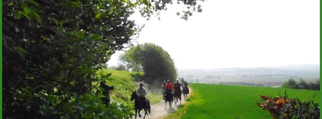 Horse riding in Heuvelland