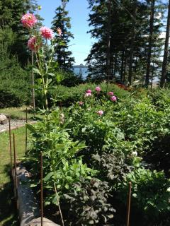 Dahlia bed nests beside hot tub and veggie garden with glimpses of the cove.