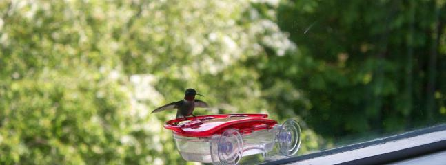 Hummingbirds visit several times a day