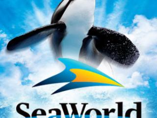 Sea World in San Diego,world famous is a little over an hour away.You will remember THIS day trip!