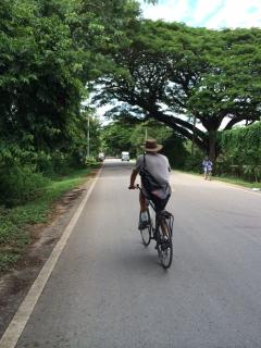 treelined cycling route