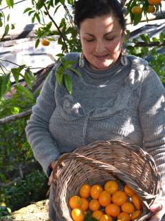 Mandarini del giardino di Villa Anna