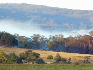 beautiful bushland view