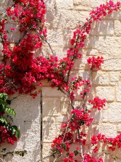 Flowers growing on our walls