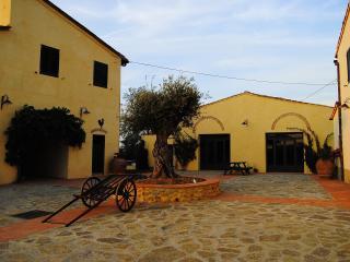 IL TORRIANO, Montefiridolfi