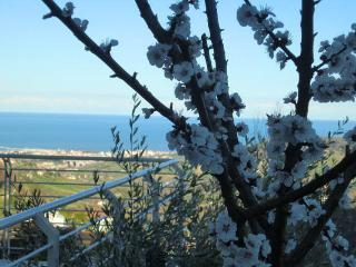 B&B della Tartana : easy relax!, Acquaviva Picena